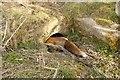 SU5130 : Fox on the Run by Bill Nicholls