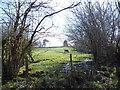 SJ2536 : Spring scene on the Llwybr Ceiriog Way by Jeremy Bolwell