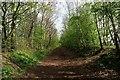 SJ6487 : Trans-Pennine Trail at Lymm, Cheshire by Matt Harrop