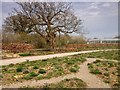 TQ0658 : RHS Garden Wisley, Path behind the Glasshouse by David Dixon