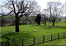 SO6613 : Sheep and lambs in a field at the eastern edge of Cinderford by Jaggery