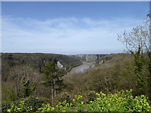 ST5673 : Avon Gorge North of Clifton Suspension Bridge by Steve Barnes