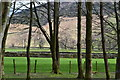 NY2906 : View through trees at Stickle Barn by David Martin