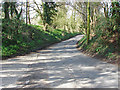 TQ0850 : Shere Road, West Horsley by Alan Hunt