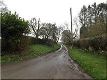 TM0461 : Dagworth Lane, Dagworth by Geographer