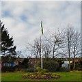 SJ9295 : Daffodils below the flagpole by Gerald England