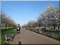 TQ3377 : Spring blossom in Burgess Park by Stephen Craven