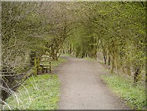 SD5830 : Path at Brockholes Nature Reserve by David Dixon