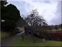 SD3598 : St Michael and All Angels, Hawkshead: churchyard (2) by Basher Eyre