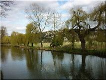 SU9948 : Shalford Park to Pewley Point by Carroll Pierce