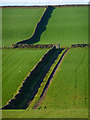 NY5643 : Farmland, Kirkoswald by Andrew Smith