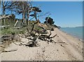 SZ4498 : Lepe, fallen trees by Mike Faherty