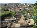 SK3384 : An Allotment in Bannerdale, Sheffield by Andrew Tryon