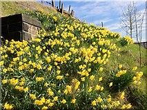 SD7807 : Spring Bank by David Dixon