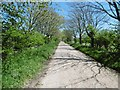 SZ4499 : Lepe, bridleway by Mike Faherty