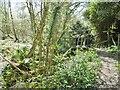 SZ4499 : Lepe, footbridge by Mike Faherty