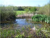 TQ4476 : Pond at Woodlands Farm by Marathon