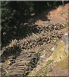 SX9065 : Logs, Chapel Hill Pleasure Grounds by Derek Harper