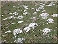 SS8740 : Molehills on Codsend Moor by Roger Cornfoot