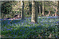 TQ2897 : English Bluebells Trent Park, London N14 by Christine Matthews