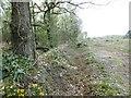SU4601 : Badminston Plantation, embankment & ditch by Mike Faherty