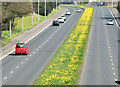 J3875 : Parkway dandelions, Belfast (April 2015) by Albert Bridge