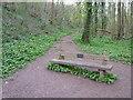 SO8066 : Seat near stepping tones in Shrawley Woods by Jeff Gogarty