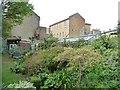 TQ3178 : Unusual neighbours in Kennington by Christine Johnstone