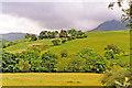 SH8927 : On Llanuwchllyn - Bwlch-y-Groes road up Cwm Cynllwyd, 1993 by Ben Brooksbank