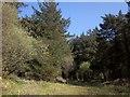 SX2576 : Bowdanoddon Wood by Derek Harper
