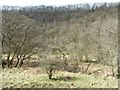 SE8289 : Howlgate Slack, from the valley bottom by Christine Johnstone