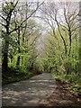 ST1717 : Road through Buckland Wood by Derek Harper