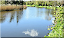J3470 : The River Lagan near the Stranmillis Weir, Belfast (April 2015) by Albert Bridge