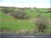 NZ8204 : Wooded farmland, below Lease Rigg by Christine Johnstone