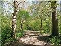 TQ6001 : Woods in Hampden Park by Paul Gillett