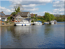 TQ0866 : River Thames, Lower Halliford by Alan Hunt