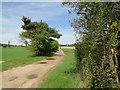 TF7800 : Bullsmire Drove, a farm track by Adrian S Pye