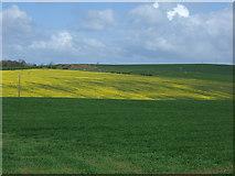 NU0440 : Crop fields near Kentstone by JThomas