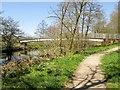 SE1565 : Footbridge  over River  Nidd  above  Pateley  Bridge by Martin Dawes