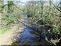 SE1171 : River  Nidd  from  Nidd  Bridge by Martin Dawes