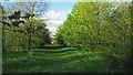 TM3263 : Pound Farm Wood, Great Glemham by Roger Jones