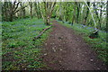 SX5157 : Path in Leigham Wood by jeff collins
