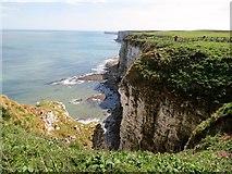 TA1974 : Bempton  Cliffs  looking  down  the  coast by Martin Dawes