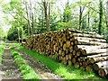 SU2321 : Track, cut logs by Alex McGregor