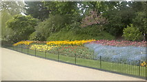 TQ2979 : View of a bright floral display in St. James's Park #2 by Robert Lamb