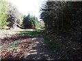 SD0997 : Bridleway, Muncaster by David Brown