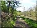 NU0724 : Track in Hepburn Wood by Russel Wills
