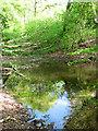 TG2404 : Small pond beside Hallback Lane by Evelyn Simak