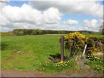 H5559 : A gap along Garvaghy Road by Kenneth  Allen