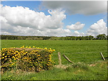 H5559 : Clouds in the sky, Garvaghy by Kenneth  Allen